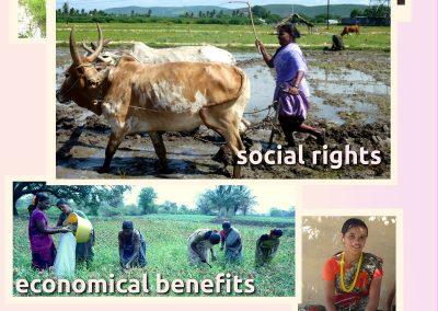 Collective farming (1)