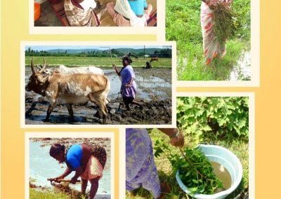 Collective farming (2)