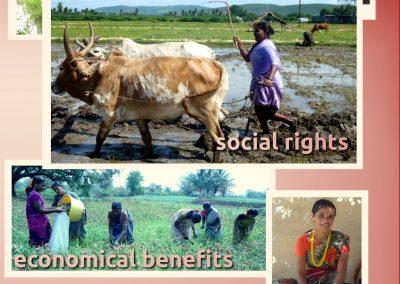 Collective farming (4)