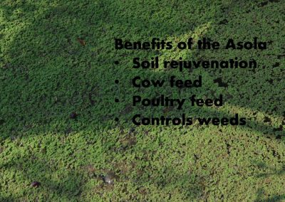 Sustainable Agriculture (10)