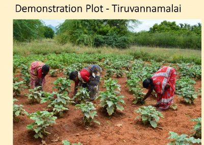 Sustainable Agriculture (24)