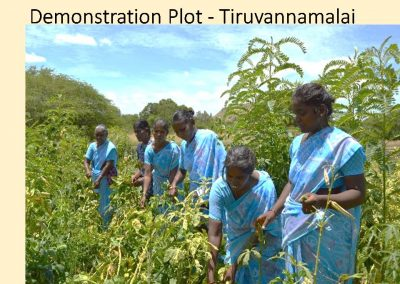 Sustainable Agriculture (25)