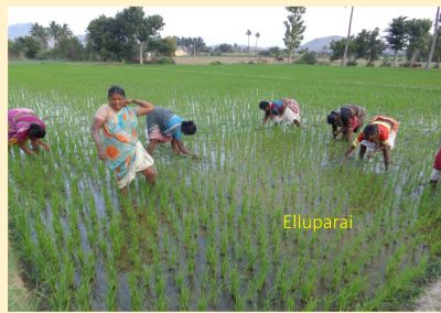 Sustainable Agriculture (26)