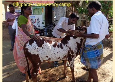 Sustainable Agriculture (30)
