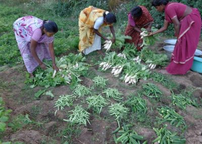 Sustainable Agriculture (41)