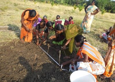 Sustainable Agriculture (43)