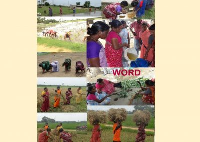 Sustainable Agriculture (52)