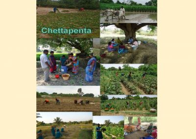 Sustainable Agriculture (54)