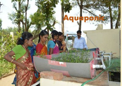 Sustainable Agriculture (7)