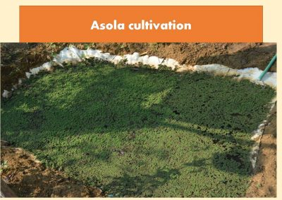 Sustainable Agriculture (9)